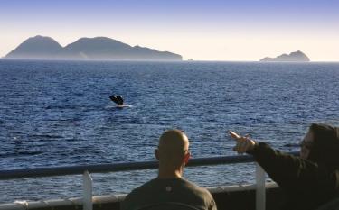 Whale Watching -Courtesy Joanne DiBona SanDiego.org